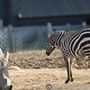 Colchester Zoo 20-12-14  041