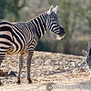 Colchester Zoo 20-12-14  036