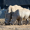 Colchester Zoo 20-12-14  045