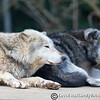 Colchester Zoo 20-12-14  048