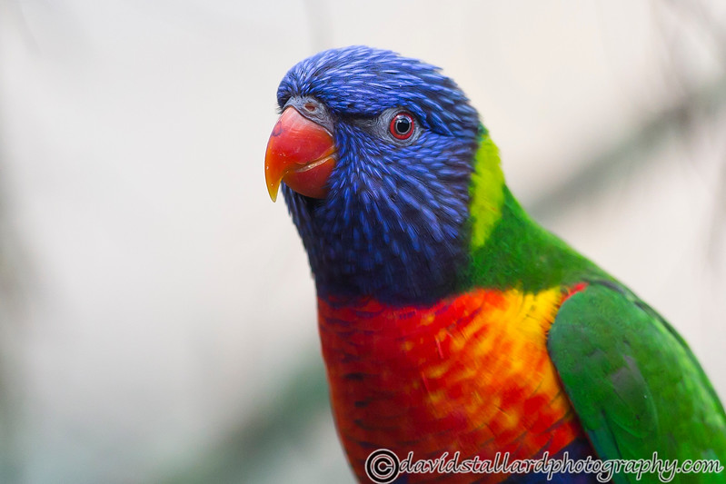 Colchester Zoo 20-12-14  013