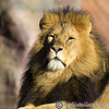 Colchester Zoo 20-12-14  017