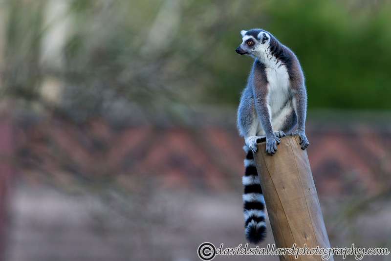 Colchester Zoo 20-12-14  008