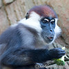Colchester Zoo 20-12-14  005