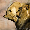 Colchester Zoo 20-12-14  020