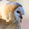 Colchester Zoo 20-12-14  032