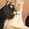 Colchester Zoo 20-12-14  030