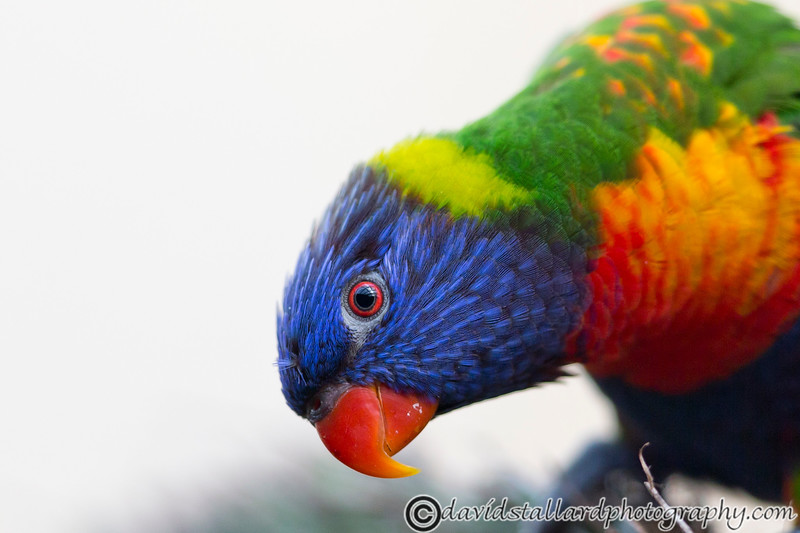 Colchester Zoo 20-12-14  016