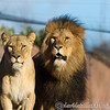 Colchester Zoo 20-12-14  027