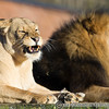 Colchester Zoo 20-12-14  029