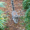 Colchester Zoo 20-12-14  009