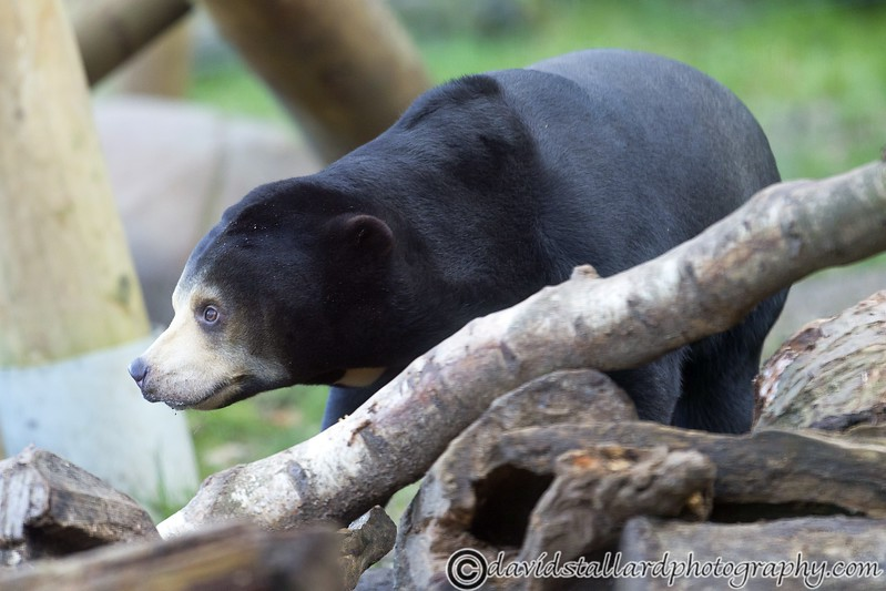 Colchester Zoo 20-12-14  002