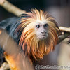 Colchester Zoo 20-12-14  004