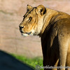 Colchester Zoo 20-12-14  031