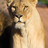 Colchester Zoo 20-12-14  024