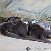 Colchester Zoo 20-12-14  034