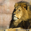 Colchester Zoo 20-12-14  019