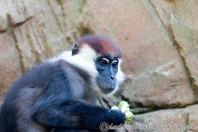 Colchester Zoo 20-12-14  006
