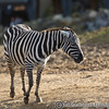 Colchester Zoo 20-12-14  040