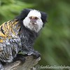 Colchester Zoo 24-06-15  0004
