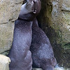 Colchester Zoo 24-01-13  040