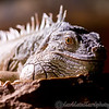 Colchester Zoo 24-01-13  004