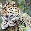Colchester Zoo 24-01-13  033