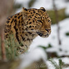 Colchester Zoo 24-01-13  022