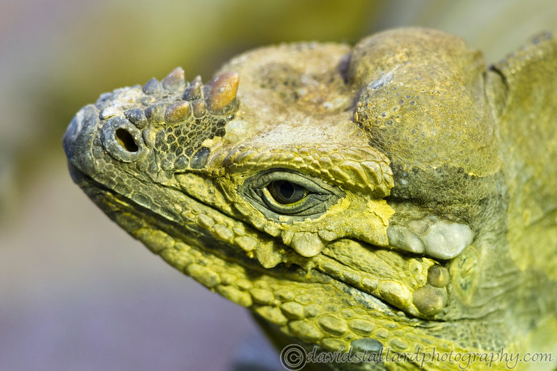 Colchester Zoo 24-01-13  002
