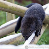Colchester Zoo 24-01-13  037