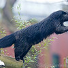 Colchester Zoo 24-01-13  036