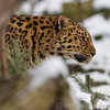 Colchester Zoo 24-01-13  025