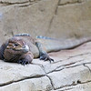 Colchester Zoo 24-01-13  003