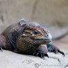 Colchester Zoo 24-01-13  001