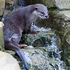 Colchester Zoo 24-01-13  038