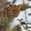 Colchester Zoo 24-01-13  023