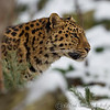 Colchester Zoo 24-01-13  024