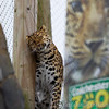Colchester Zoo 24-01-13  027