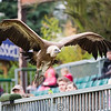 Colchester Zoo 25-01-14  0042