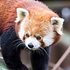 Colchester Zoo 25-01-14  0014
