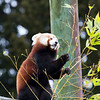 Colchester Zoo 25-01-14  0012