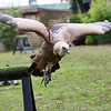 Colchester Zoo 25-01-14  0038