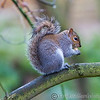 Colchester Zoo 25-01-14  0022