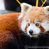 Colchester Zoo 25-01-14  0011