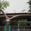 Colchester Zoo 25-01-14  0041