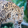 Colchester Zoo 25-01-14  0001