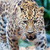 Colchester Zoo 25-01-14  0002