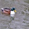 Colchester Zoo 25-01-14  0025