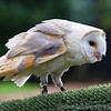 Colchester Zoo 25-01-14  0032