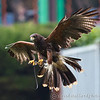 Colchester Zoo 25-01-14  0031